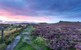 Обои sunset, purple, colour
