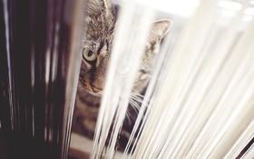 Картинка кот, смотрит, взгляд, кошка