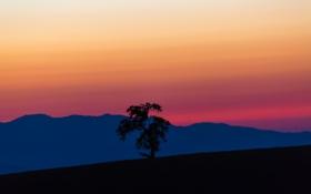Картинка небо, горы, дерево, склон, силуэт, зарево