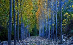 Картинка осень, листья, деревья, Испания, Сеговия
