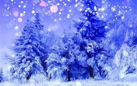 Обои холод, зима, лес, снег, деревья, пейзаж, синий