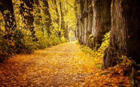 Обои листья, осень, деревья, мужчина, путь, парк