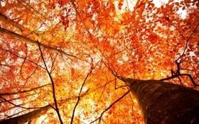 Картинка осень, свет, деревья, листва, ракурс, by Robin de Blanche, Our Autumn