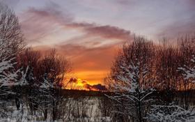 Обои небо, облака, снег, деревья, закат, Зима, вечер