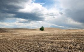 Обои поле, небо, пейзаж, куст