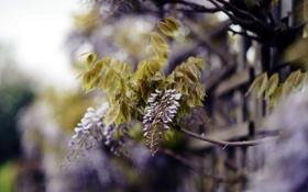 Обои ветки, природа, дерево, весна