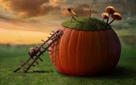Картинка креатив, грибы, улитка, лесенка, тыква, подзорная труба