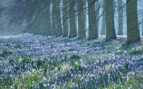 Картинка весна, ветки, цветение, поле, деревья, первоцвет, крокусы