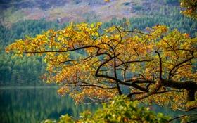 Обои листья, осень, деревья, склон, горы, озеро, ветка
