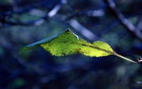 Обои макро, природа, ветка, листик