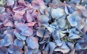 Картинка цветы, фон, лепестки