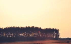 Обои лес, лето, деревья, сено