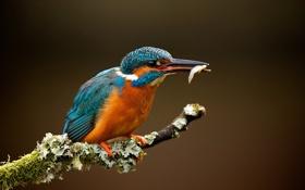 Обои птица, рыба, ветка
