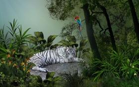 Обои белый, листья, деревья, тигр, тропики, попугай