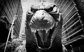 Обои godzilla, годзилла, монстр, динозавр, город