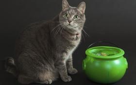 Картинка кот, клад, денежка