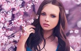 Картинка взгляд, цветы, вишня, Девушка