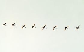 Обои небо, птицы, минимализм, полёт