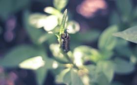 Обои макро, гусеница, насекомое
