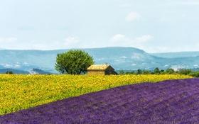 Обои поле, цветы, горы, дом, Франция, подсолнух, лаванда