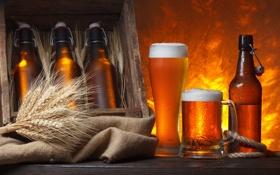 Обои пена, бокал, пиво, колоски, кружка, бутылки, ящик