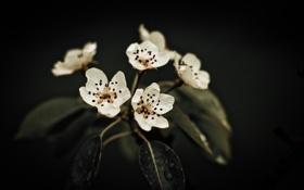 Обои листья, цветы, темный фон, цветение, flowers