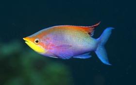 Обои цвета, глаз, рыба