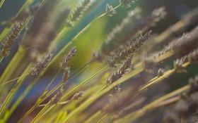 Картинка поле, цветок, лето, трава, макро, цветы, природа