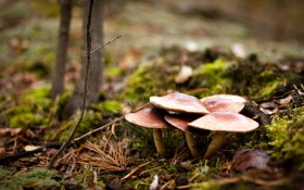 Картинка лес, природа, грибы
