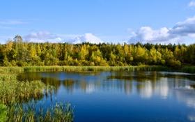 Картинка лес, Озеро, водоём, отражение в воде