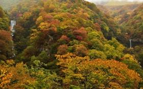 Обои лес, деревья, пейзаж, листва, водопады