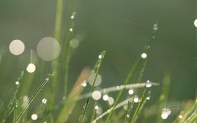 Обои трава, капли, макро, роса, блики