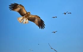 Картинка орёл, птица, небо