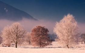 Картинка winter, пейзаж, nature, лес, wood, дерево, крона