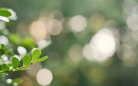 Картинка растение, боке, листочки, фокус