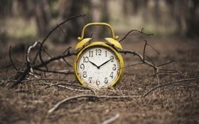 Обои время, фон, часы, ветка
