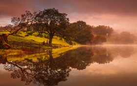 Картинка деревья, туман, озеро, отражение