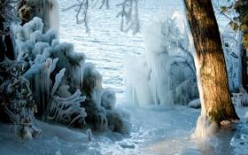 Картинка зима, природа, дерево, лёд