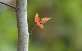 Обои осень, лист, фокус, ствол, паутинка