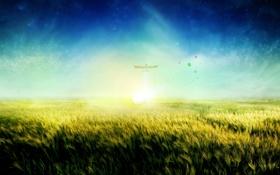 Обои заря, солнышко, поле, трава, рассвет