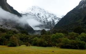 Обои ледник, лес, Fiordland National Park, Фьордленд, зелень, ущелье, Новая Зеландия
