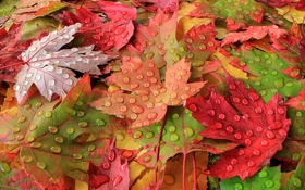 Обои осень, листья, макро, роса, краски