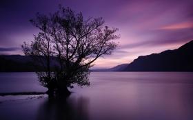 Обои закат, горы, дерево, водная гладь