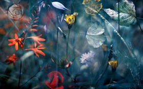 Картинка цветы, природа, монтаж