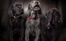 Картинка собаки, дом, фон