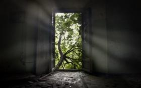 Обои природа, комната, дверь