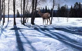 Картинка зима, лес, снег, пейзаж, природа, олень, тени