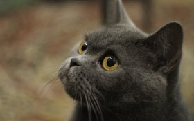 Обои кот, друг, нежный, хитрый, единственный, мудрый, ленивый