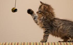 Картинка кошка, котенок, игрушка, игра, пушистый