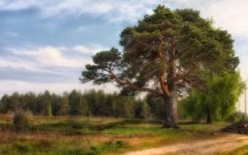 Картинка пейзаж, поле, дорога, дерево